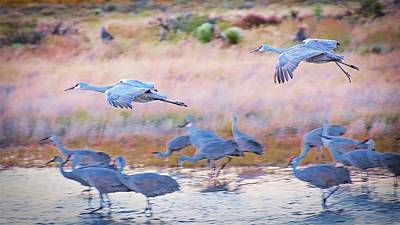 Photograph - Evening Return, Sandhill Cranes by Flying Z Photography by Zayne Diamond