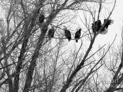 Photograph - Evening Roost Of Eagles by David Bearden