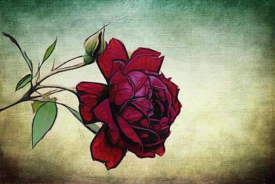 Photograph - Evening Rose Perfection by Alice Gipson