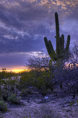 Photograph - Evening Saguaro 1 - Tucson - Arizona by Nikolyn McDonald
