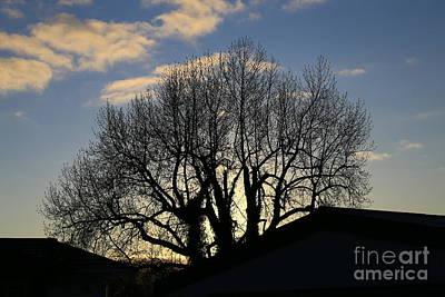 Photograph - Evening Silhouette by Nareeta Martin
