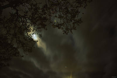 Moonlit Night Photograph - Evening Stroll  by Soli Deo Gloria Wilderness And Wildlife Photography