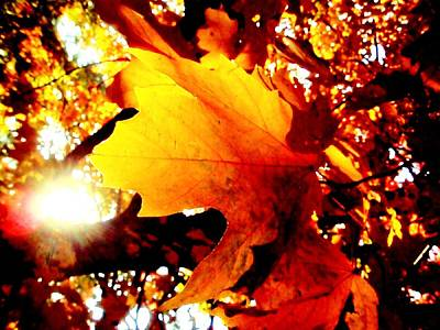 Photograph - Evening Sun Through Leaves by Beth Akerman