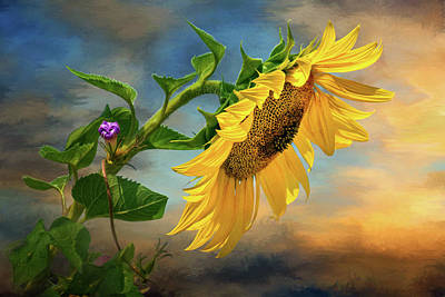 Photograph - Evening Sunflower by Carolyn Derstine