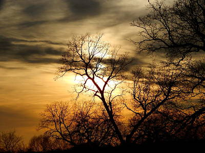 Photograph - Evening by Virginia Kay White