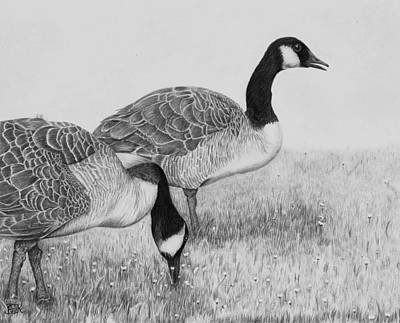 Canadian Geese Drawing - Evening Walk by AniK