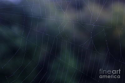 Spider Photograph - Evening Web by Sverre Andreas Fekjan