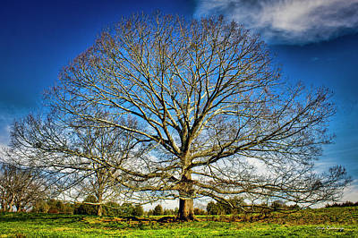 Ever Expanding 2 Field Red Oak Tree Art Art Print