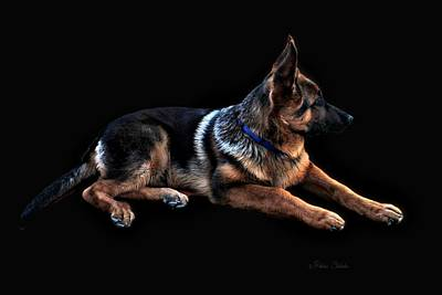 Photograph - Ever Vigilant German Shepherd by Barbara Chichester