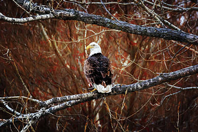 Photograph - Ever Vigilant  by Susan Rissi Tregoning