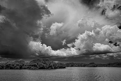Photograph - Everglades 0257bw by Rudy Umans