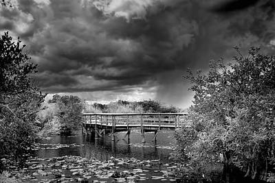 Photograph - Everglades 0823bw by Rudy Umans