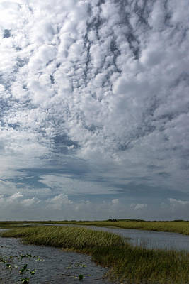 Photograph - Everglades 1 by Steven Richman