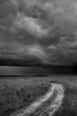 Photograph - Everglades 2425 by Rudy Umans