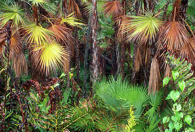 Photograph - Everglades Forest In Hammock by John Burk