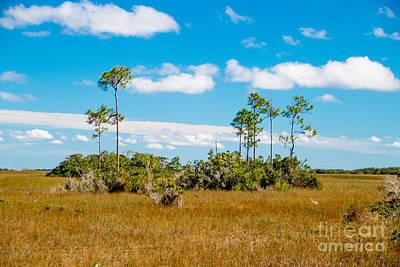 Tree Photograph - Everglades Landscape by Amanda Mohler