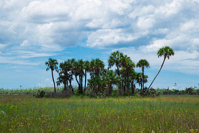 Photograph - Everglades Landscape by Christopher L Thomley