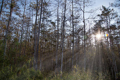 Road Photograph - Everglades Light by J Darrell Hutto