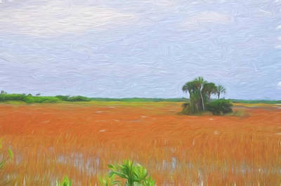 Photograph - Everglades National Park Sawgrass by Ginger Wakem