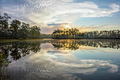 Photograph - Everglades Ovation by Jon Glaser