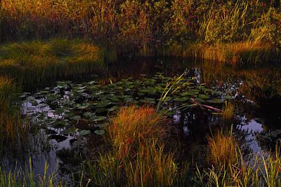Photograph - Everglades Pond by Roberto Aloi