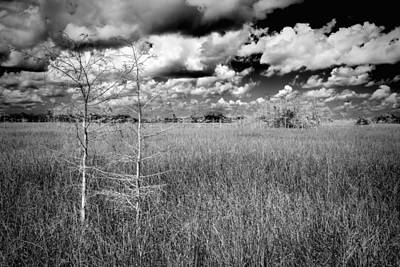 Photograph - Everglades Slough by Rudy Umans