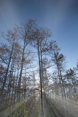 Sun Rays Photograph - Everglades Star Burst by J Darrell Hutto