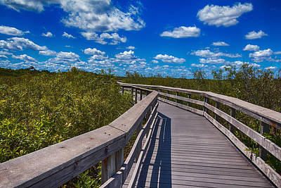Everglades Trail Art Print