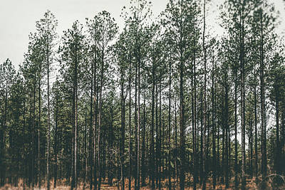 Photograph - Evergreen by Andrea Anderegg