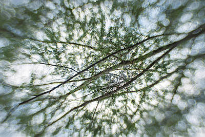 Photograph - Evergreen by Angie Rea