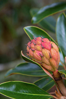 Photograph - Evergreen Flower by Allan Morrison