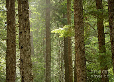 Photograph - Evergreen Forest by Idaho Scenic Images Linda Lantzy
