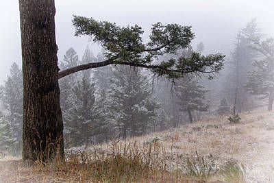 Photograph - Evergreen Forest Snow Shower by Carolyn Derstine