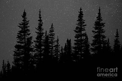 Photograph - Evergreen Forest With Night Sky Stars Black And White by John Stephens
