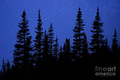 Photograph - Evergreen Forest With Night Sky Stars by John Stephens