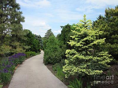 Photograph - Evergreen Garden by Kathie Chicoine