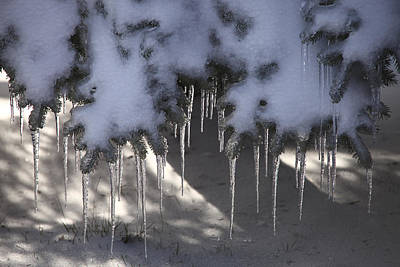 Photograph - Evergreen Icicles by Bryan Davies