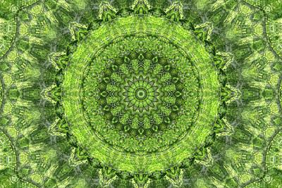 Digital Art - Evergreen II by Lynne Guimond Sabean