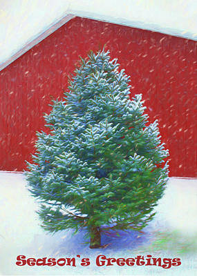 Photograph - Evergreen In Winter 3 by Nikolyn McDonald