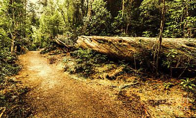Log Wall Art - Photograph - Evergreen Jungle Trails by Jorgo Photography - Wall Art Gallery
