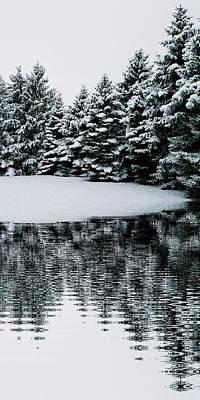 Wall Art - Photograph - Evergreen Snow by Serbennia Davis