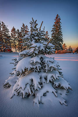 Photograph - Evergreen Under A Blanket Of Snow by Rick Berk
