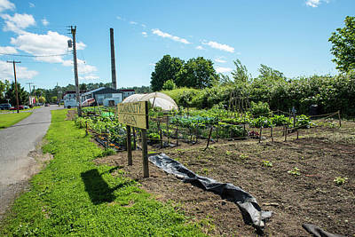 Photograph - Everson Community Garden by Tom Cochran