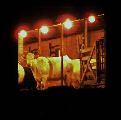 Photograph - Every Cow Has Her Day by Larry Campbell