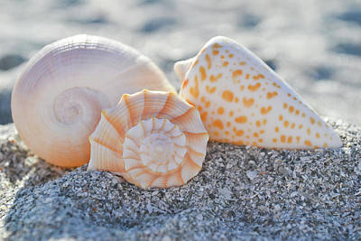 Photograph - Every Shell Has A Story by Melanie Moraga