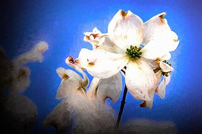 Photograph - Every Spring by Ches Black