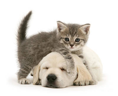 Photograph - Everybody Needs A Puppy For A Pillow by Warren Photographic