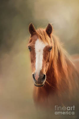 Photograph - Everyone's Favourite Pony by Michelle Wrighton
