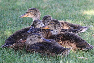 Photograph - Everything Is Ducky by Greg Wickenburg