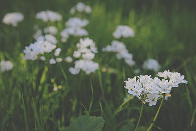 White Flowers Photograph - Everything Is New Again by Laurie Search